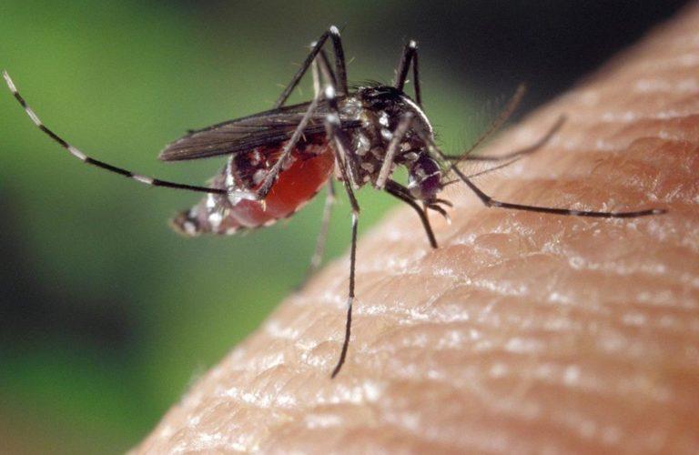 Komary latem to udręka wielu z nas, jak się przed nimi chronić?